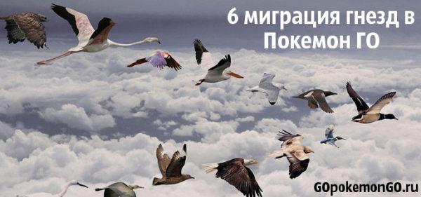 6 миграция гнезд покемонов