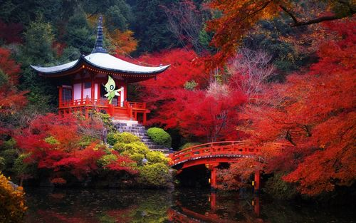Daigo Temple and BentendoFushimi Kyoto Japan Mountain Tree Pond temple Bridge Red leaves Precincts of a temple Fallen leaves