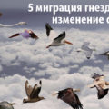 5 миграция гнезд покемонов и изменение спавнов