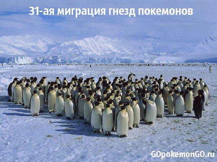 31-ая миграция гнезд покемонов
